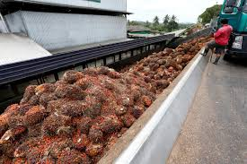 Malaysia to engage with India over palm oil curbs – ministe